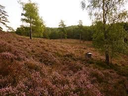A bee hive in heather heaven