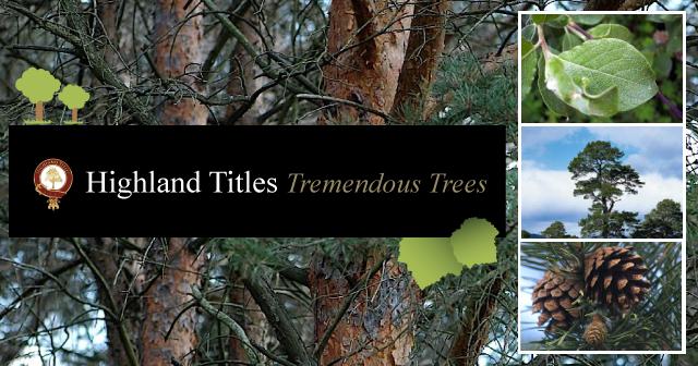 tremendous-trees-content-banner