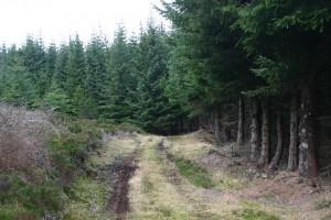 Grumack Forest courtesy of Iain Macaulay, licenced for re-use under Creative Commons