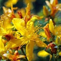 flower-374512_640