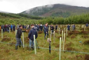 Highland Titles Tree Planting