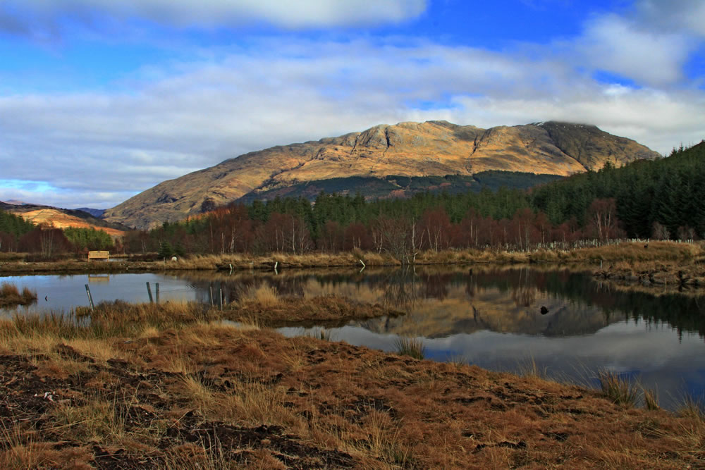 Glencoe Wood View