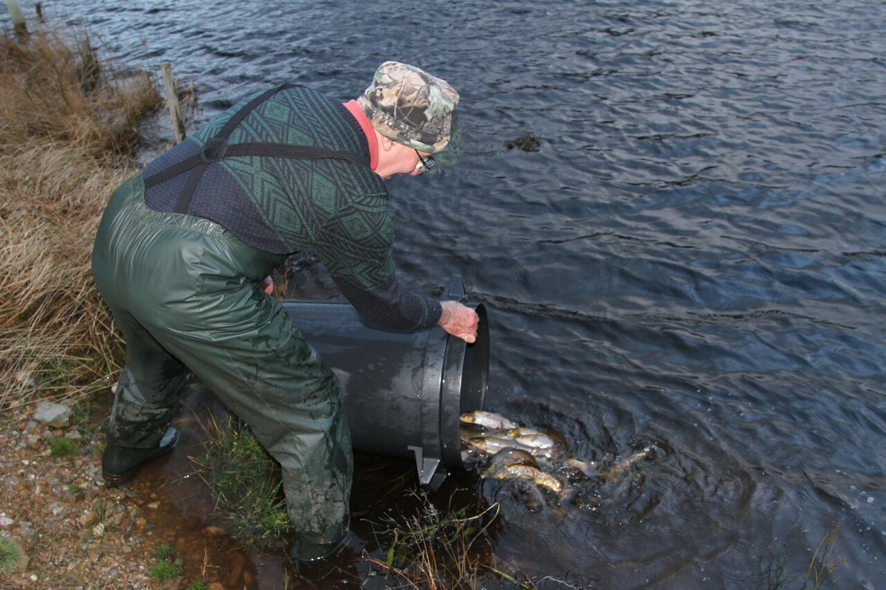 Fish Stocking at the Reserve - Highland Titles