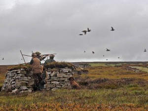 Grouse-shooting-1