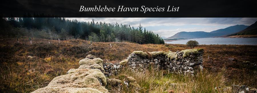 bumblee-haven-species-list-top-image