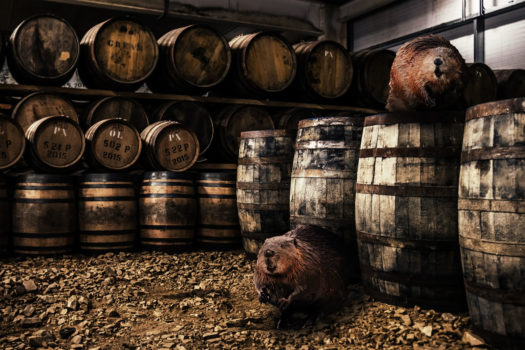 Beavers and Whisky casks