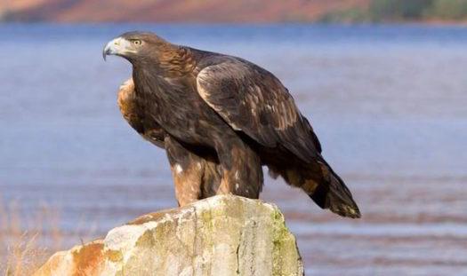 Endangered Animals in Scotland