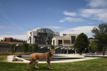 lynx in scotland