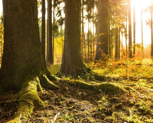 Why Trees Are Important to Nature Reserves
