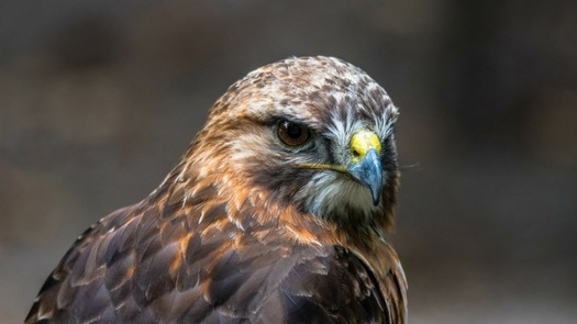 Highland Titles February Update From The Reserve Buzzard