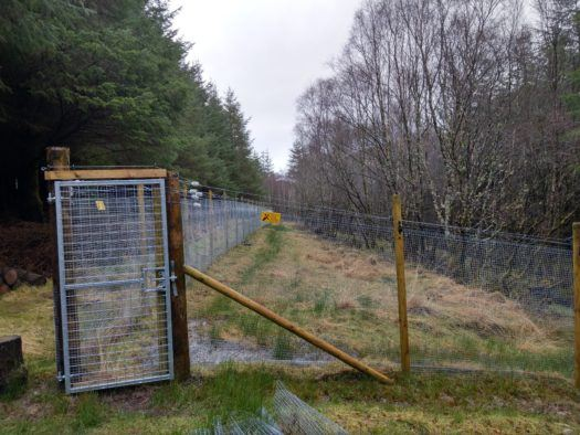 First Scottish Wildcat rehabilitation enclosure provides lifeline for species