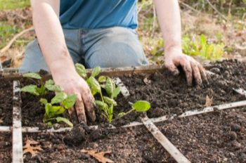 square foot gardening planting