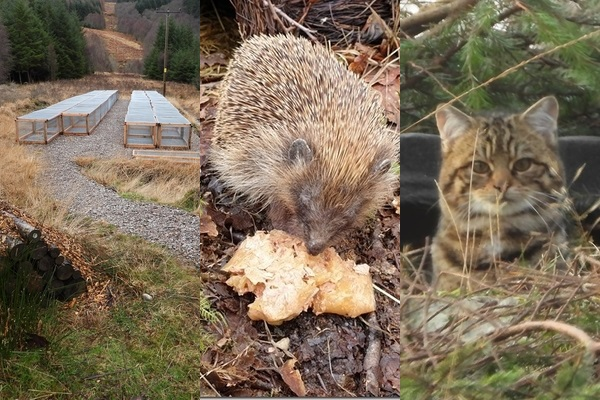 Collage of water voles cages, hedgehog, and wildcat