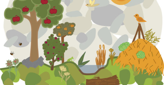 Creating A Permaculture Pond
