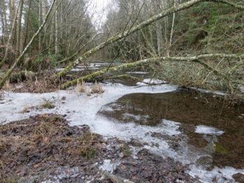 Swamp beside the River Conon