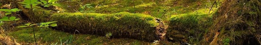 Living Logs