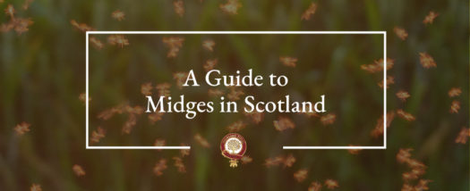 A Guide To Midges in Scotland