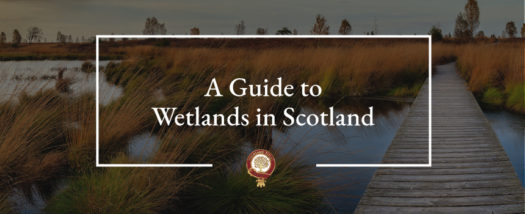 The Ultimate Guide to Wetlands 1.0