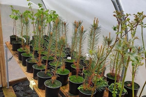 Polytunnel and tree nursery