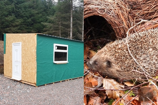 Collage of Hedgehog Hospital & Close Up of Hedgehog