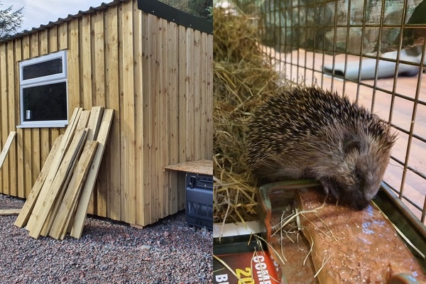 Collage of Hedgehog Hospital being built and new baby hedgehog