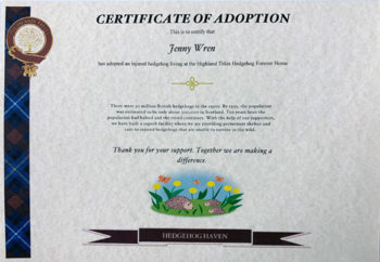 adopt a hedgehog
