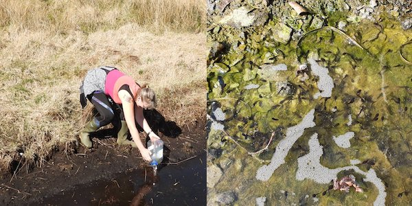 Collage of tadpoles in the puddle & Fiona moving them to the Loch