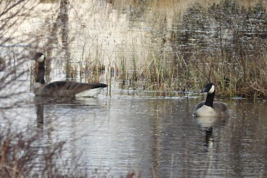 Update from the Reserve – April 2020
