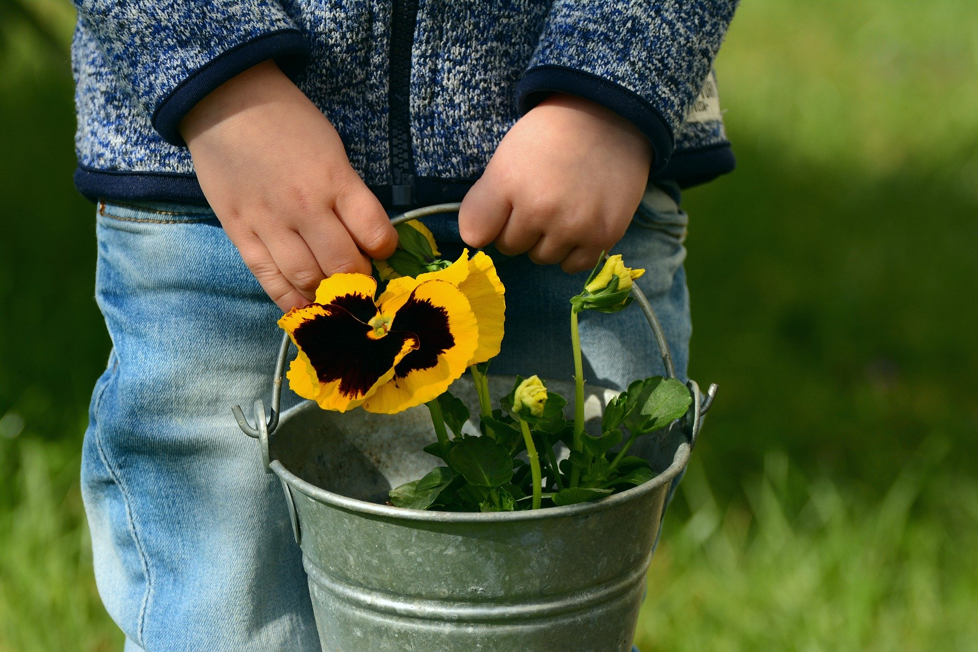 Child holding a Pansy Flower in a Bucket