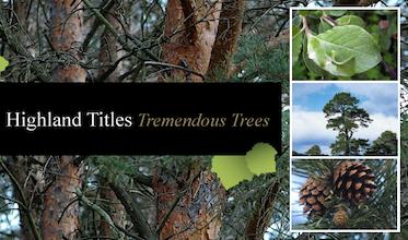 Tremendous Trees - Hazel Tree