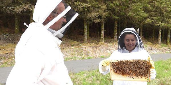 Vérification d'une ruche