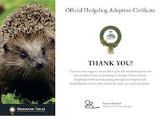 Hedgehog Adoption Certificate Preview