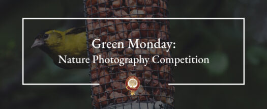 Green Monday: Nature Photography Competition (Winners updated)